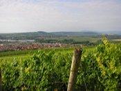 Vue sur Marlenheim et ses environs